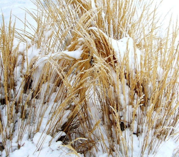 WINTER GRASS / Daily Photograph #2108